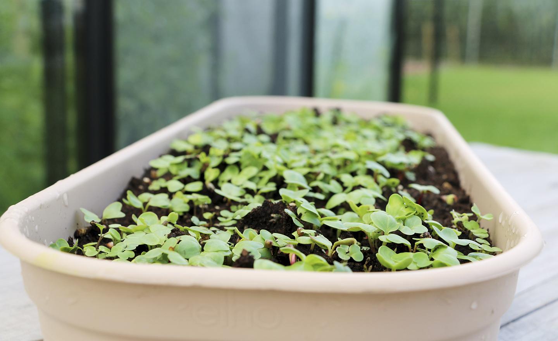 Kweek je eigen salade angelo dorny - Bedek een goedkoop terras ...