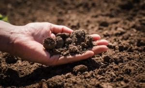 De ideale grond voor je moestuinbak